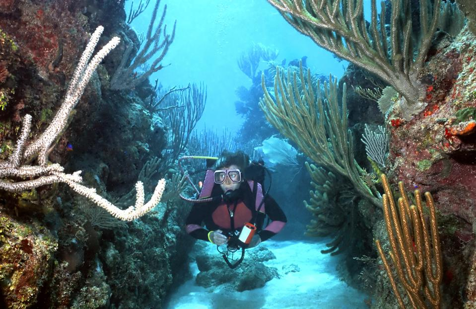 A female scuba diver in a narrow space between two reefs covered in large corals