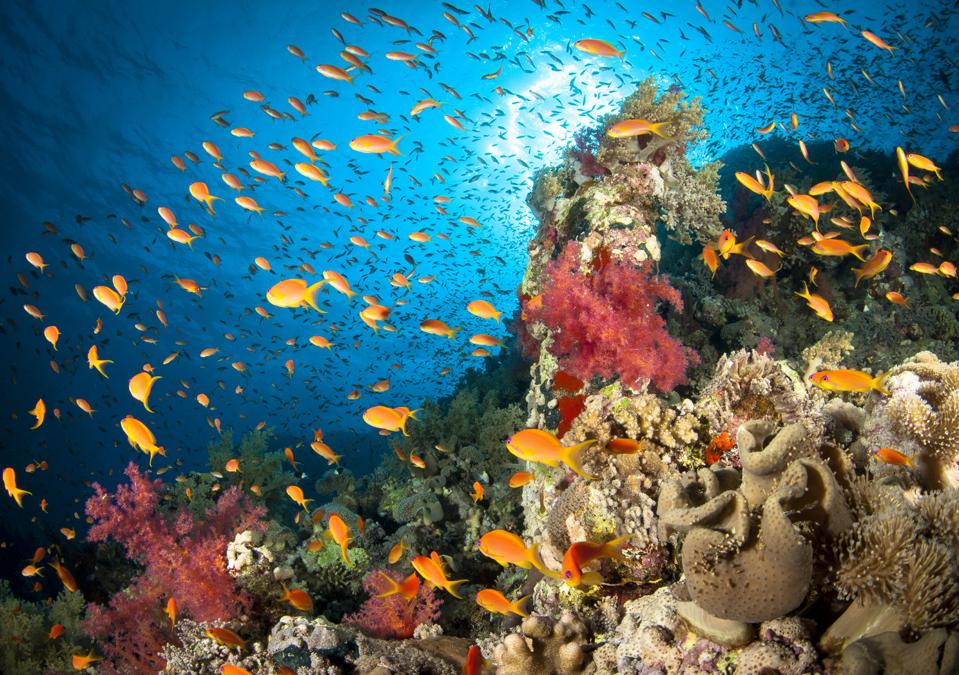 A coral reef with different colors and types of corals and hundreds of small orange-yellow fish