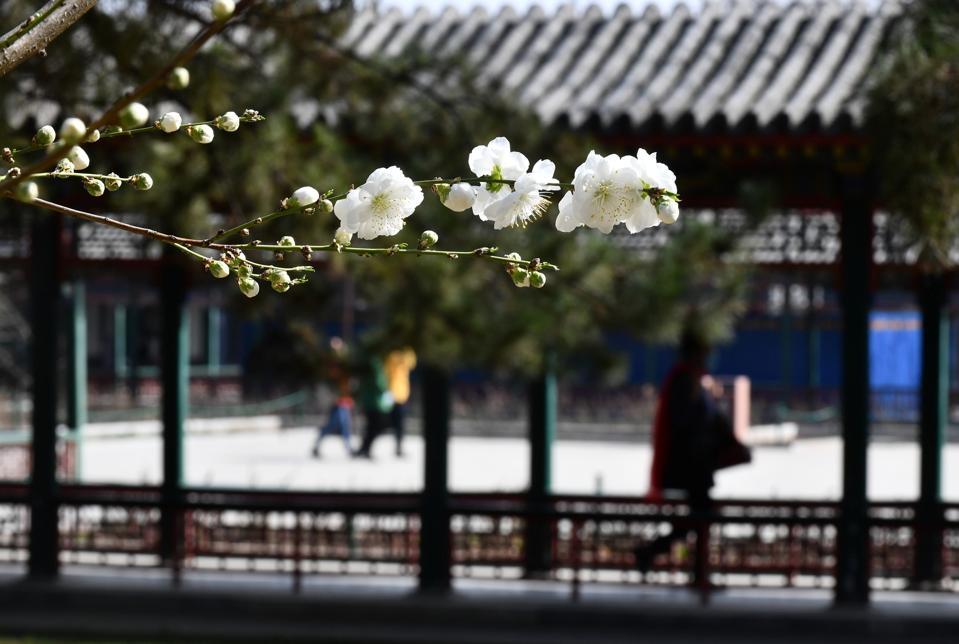 CHINA-BEIJING-SPRING-FLOWERS (CN)