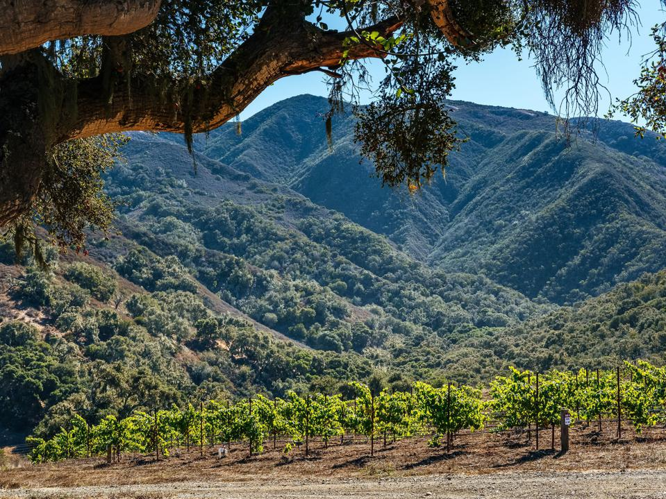 California vineyards and mountains