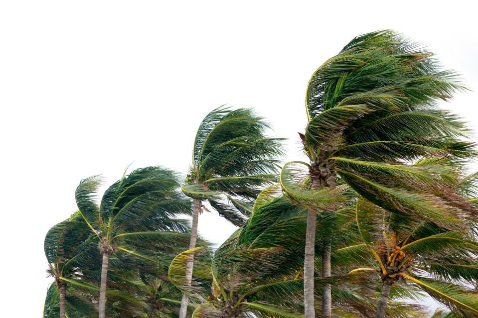 windy tropical storm