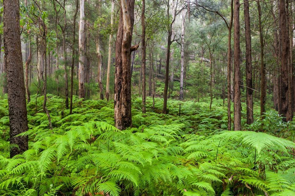 Amazon Berowra Valley National Park Sydney