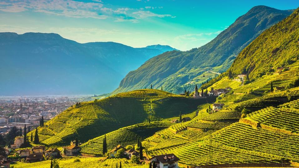 Vineyards view in Santa Maddalena Bolzano. Trentino Alto Adige Sud Tyrol, Italy.