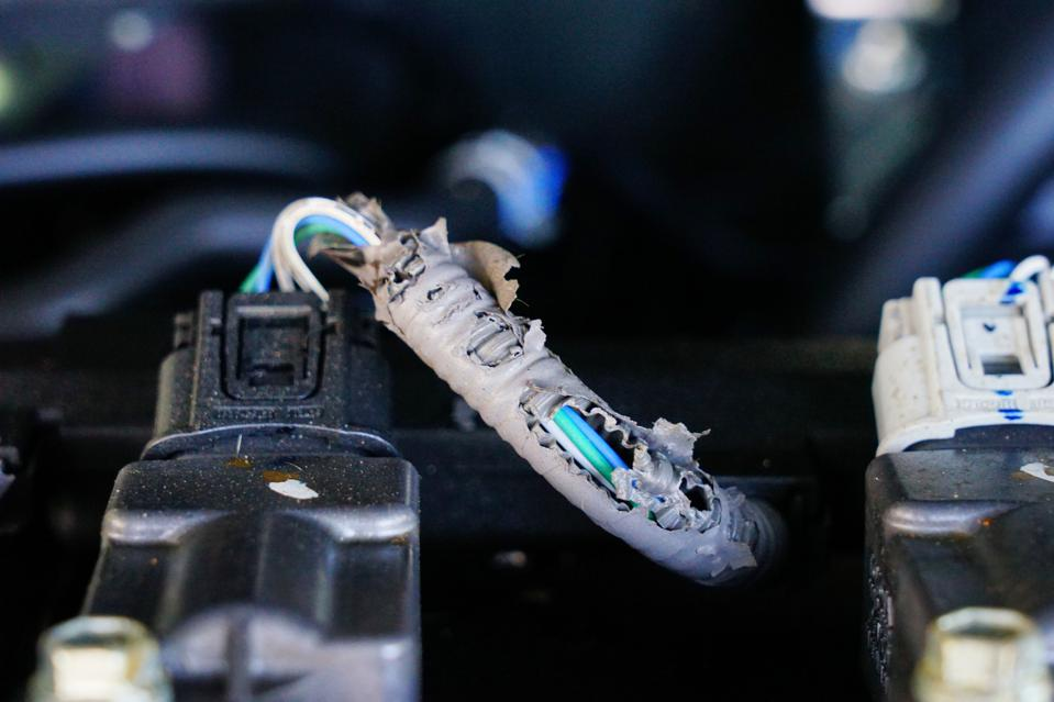 Car engine electrical wiring harness damage from rat