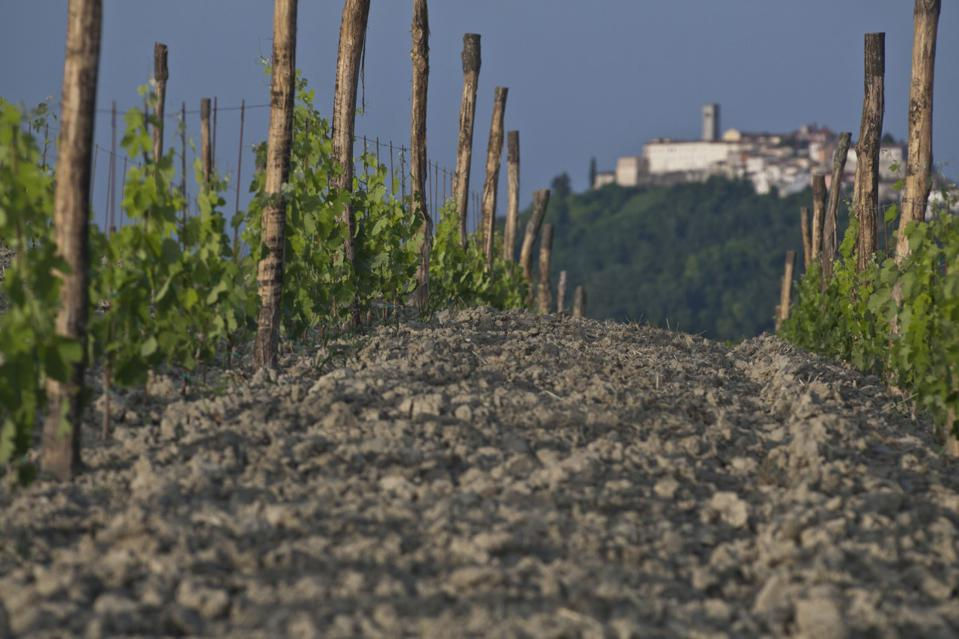 Fakin Vineyard with Medieval Hilltop Town Motovun in the Background