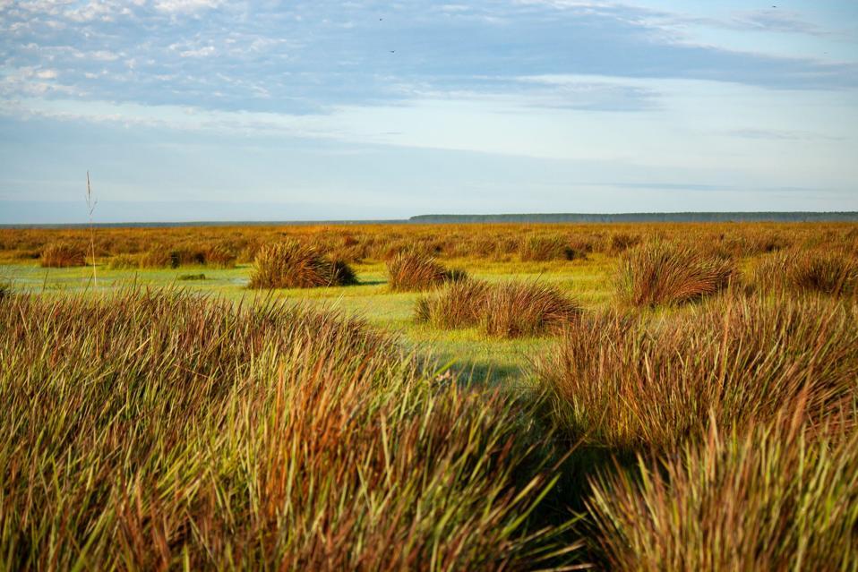 The grasslands of Iberá National Park in Corrientes, Argentina. (Credit: Sheela Turbek)