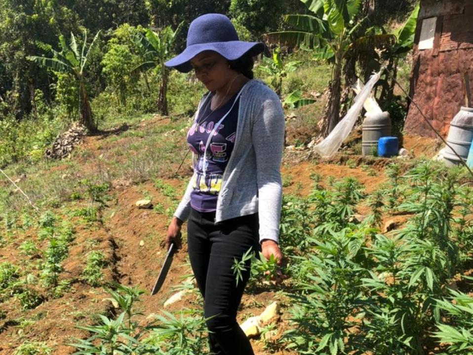 Accompong women farmers