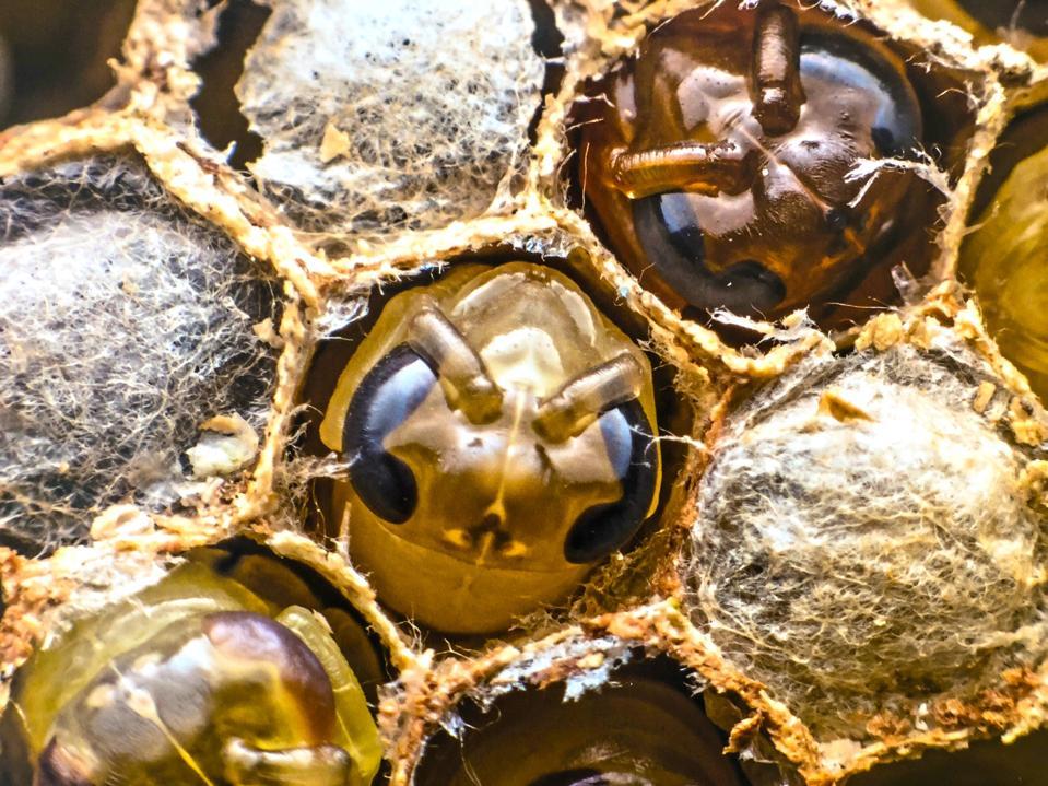 Newborn honeybees in bee hive