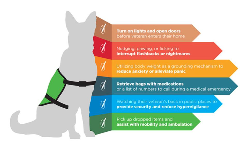 the types of activities done by service animals