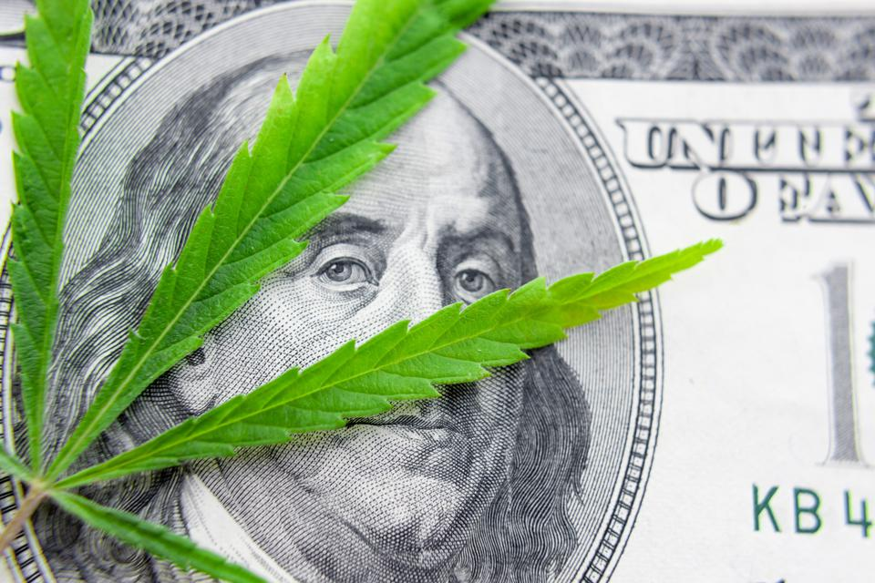 US dollar bill over the green cannabis leaves.