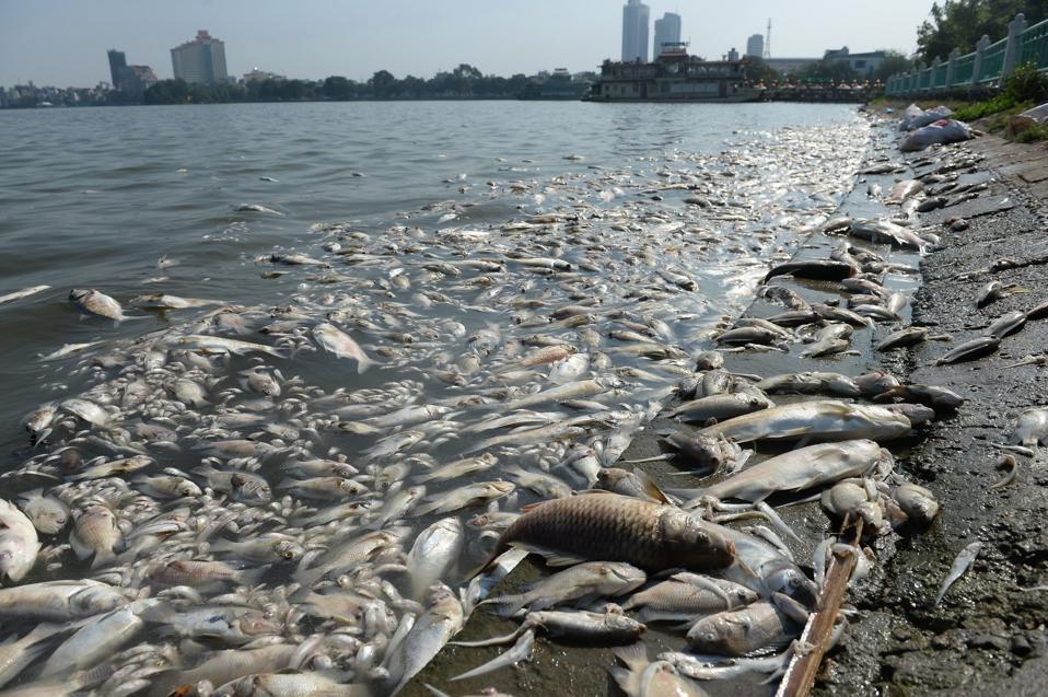 TOPSHOT-VIETNAM-ENVIRONMENT-POLLUTION-FISH-DEATH