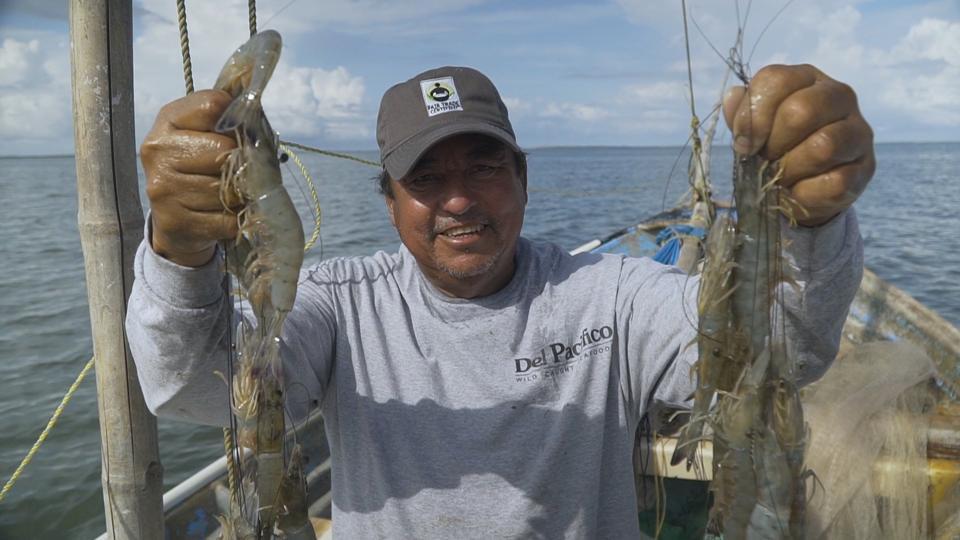 Fisherman holding freshly caught shrimp.