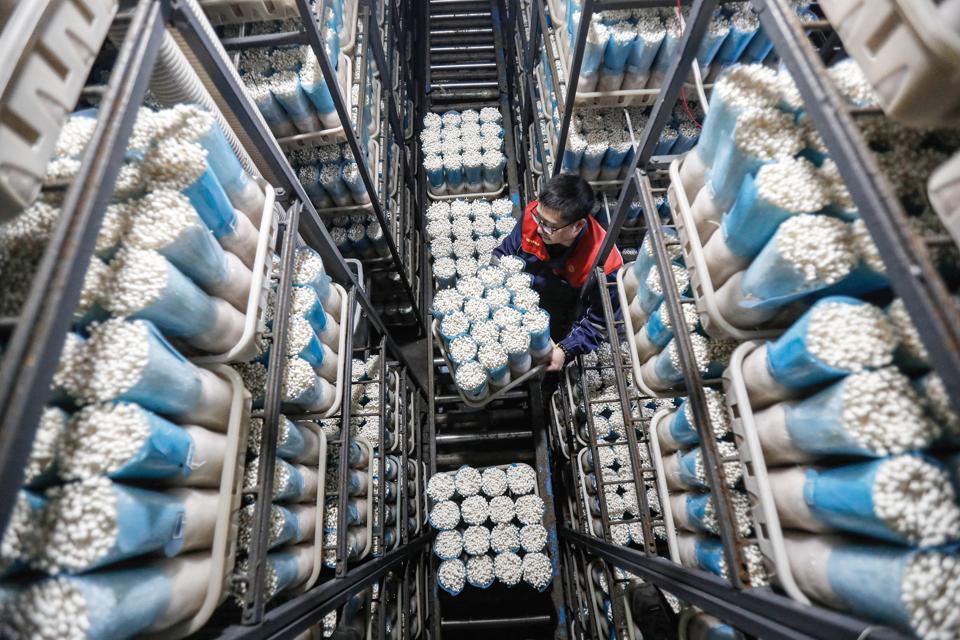 Workers Pack Enoki Mushrooms In Shenyang