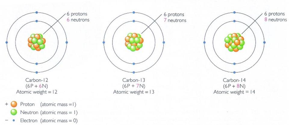 Carbon comes in three different major isotopes: carbon-12, 13, and 14.
