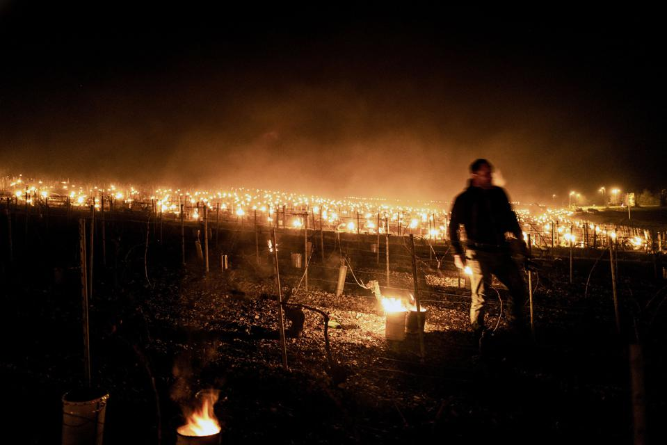 Winegrowers in vineyards near Chablis, Burgundy, on April 7, 2021 as temperatures fall below zero degrees celsius during the night.