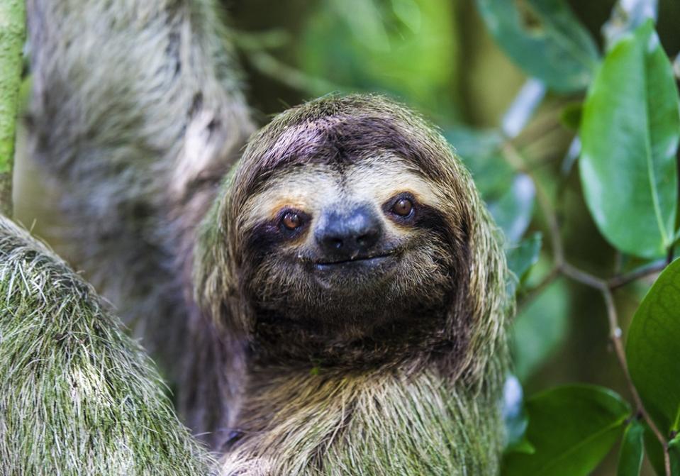sloth in Manuel Antonio National Park