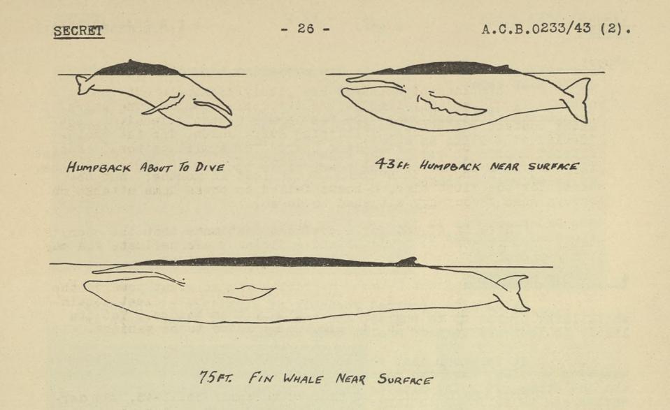 Whale diagrams