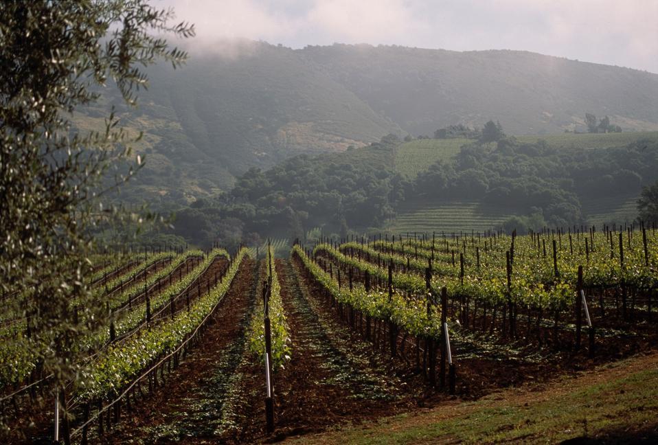 The BOND St. Eden is grown on this vineyard in Oakville.