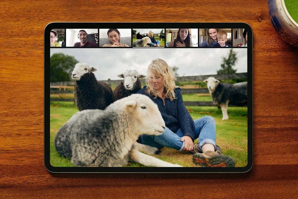 Photo of a laptop screen and a Zoom call with a woman sitting with sheep in a field.