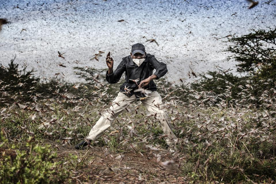 swarm of locusts around man