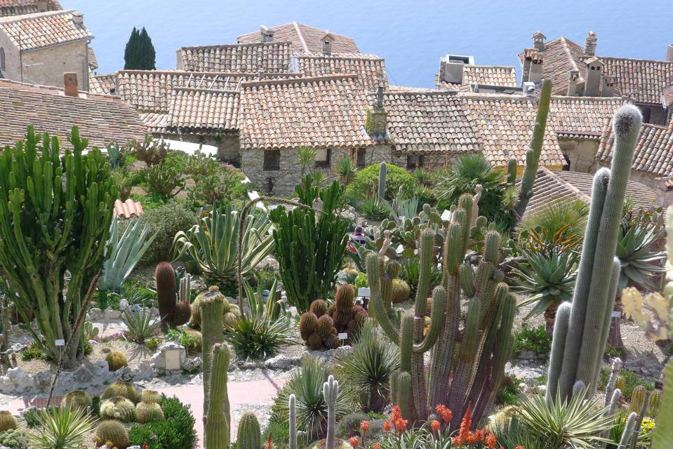 The exotic garden of Eze