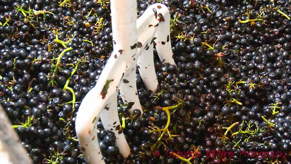 Gamay grapes in a fermentation tank in Beaujolais starting to ferment
