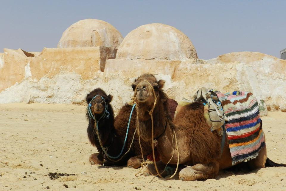 Camels-outside-Tatooine