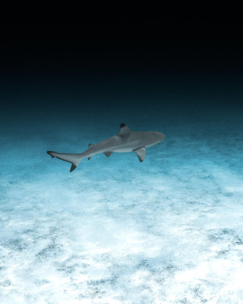 Patina Maldives is implementing a number of marine conservation initiatives.