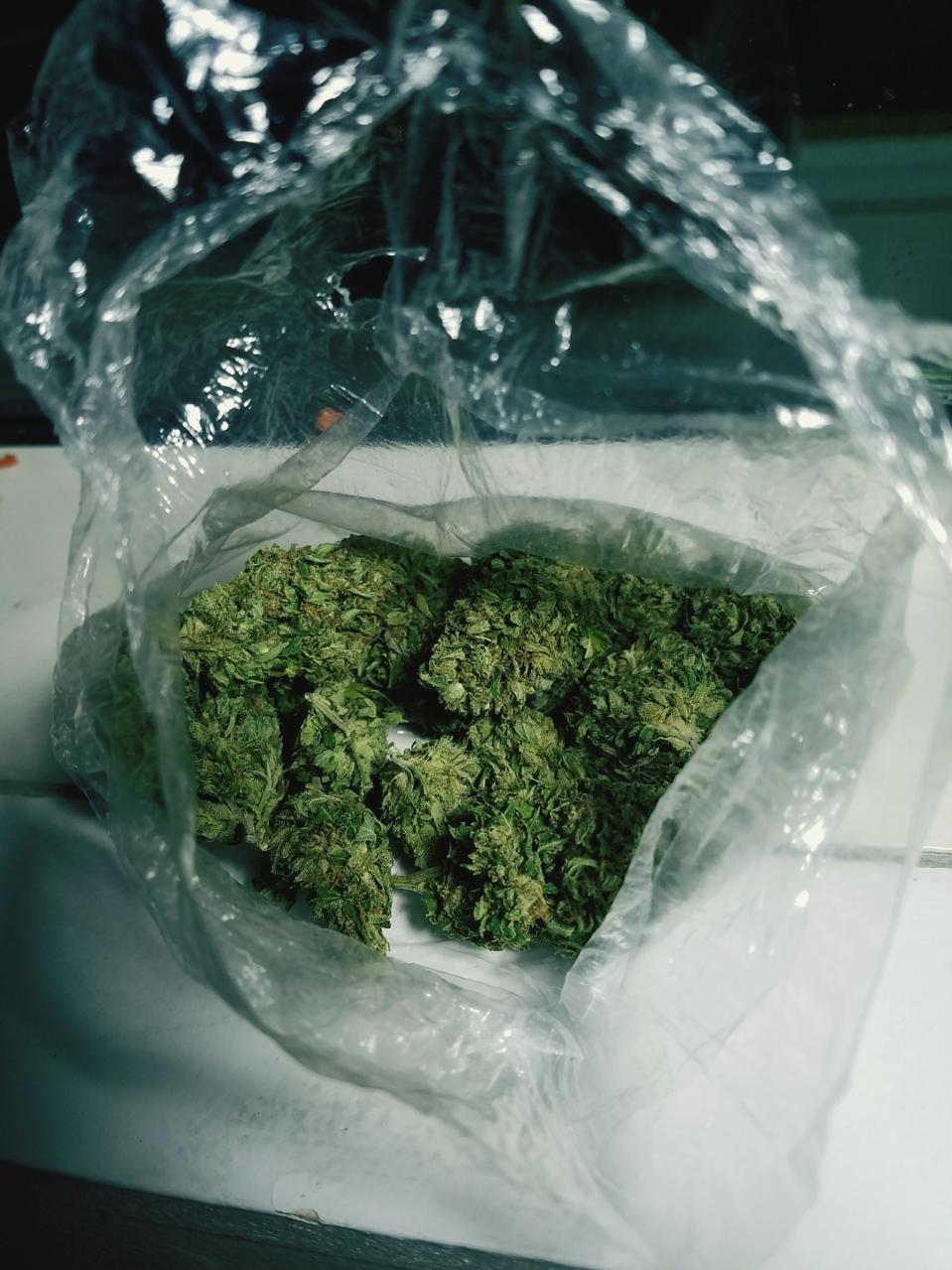 Close-Up Of Marijuana