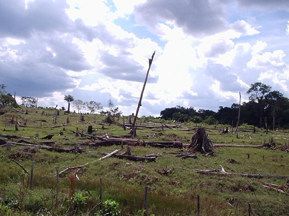 Deforestation rainforest. (Credit: Daniele Gidsicki / CC BY 2.0)