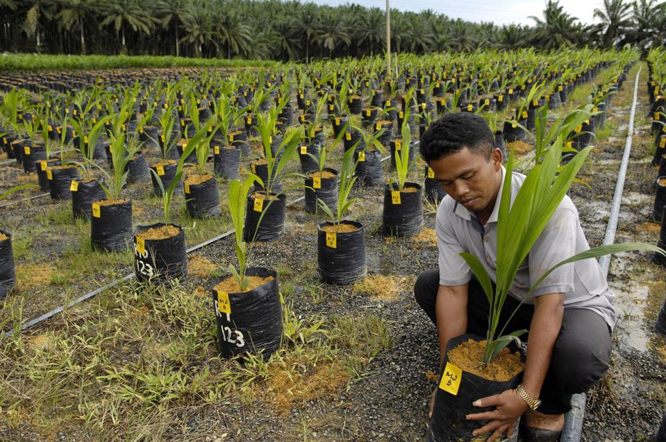 Visit To IOI's Plantation & Mill, Palm Oil Supplier To Neste Oil