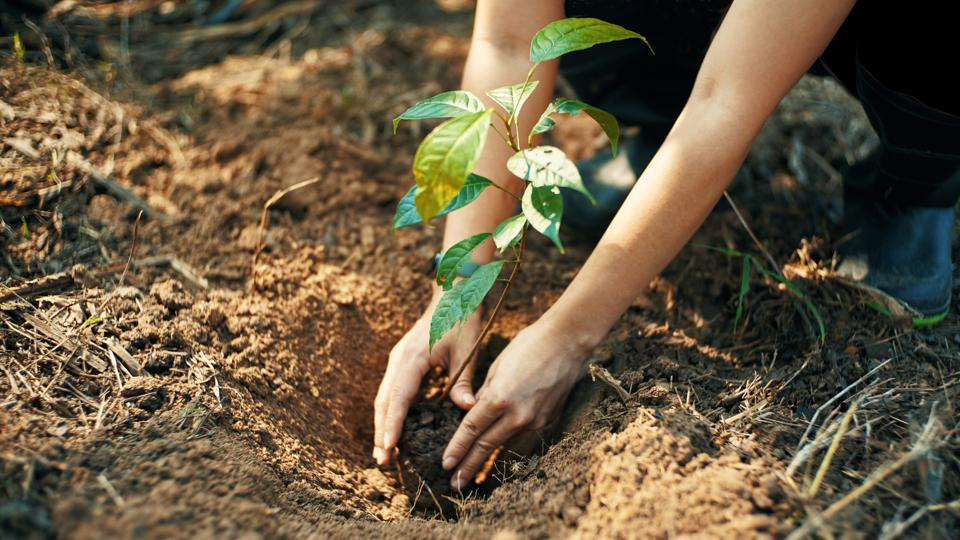 Plant for the earth