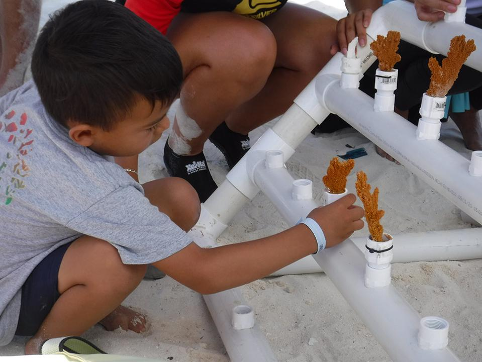 Child creating a coral nursery