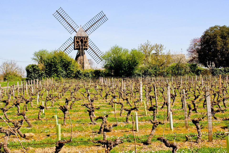 Moulin à vent produces premium cru wines at a attractive price.