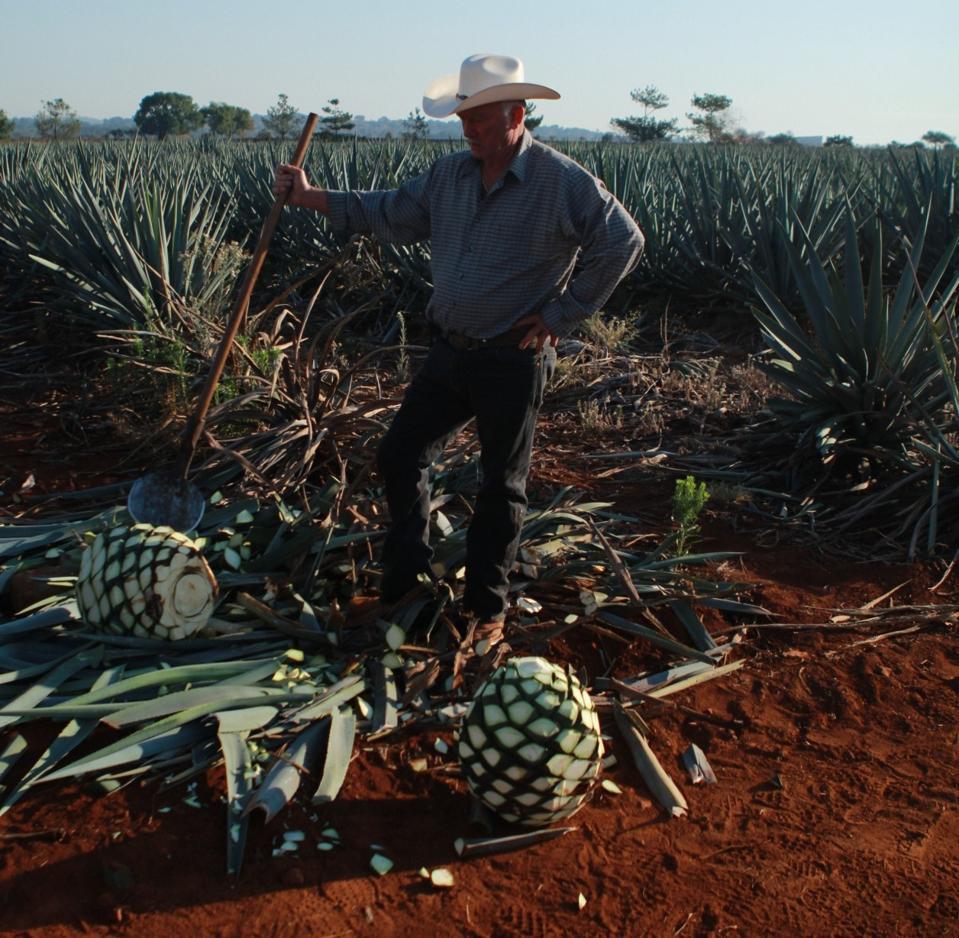 Don José Amezola García working on agave field