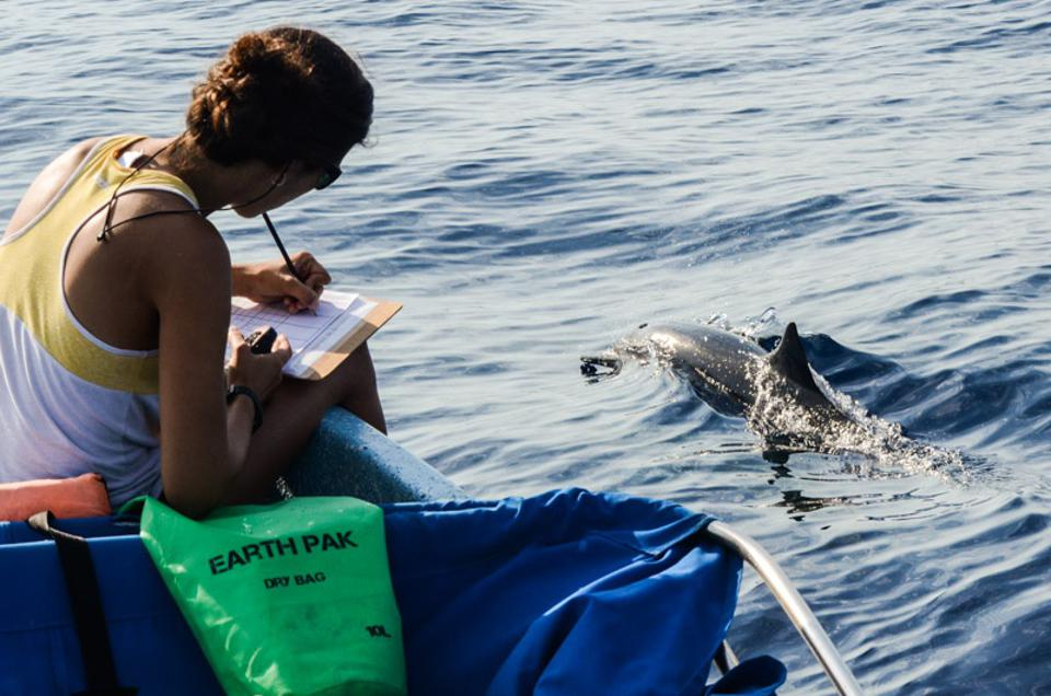Researcher on a small boat takes notes as a dolphin swims by.