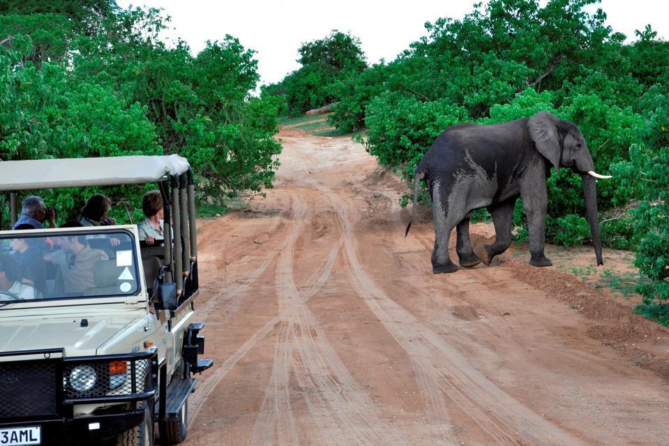 Elephant. Chobe National Park. Botswana