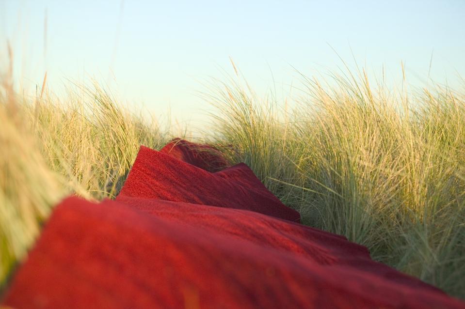 Red Carpet Unrolled Across Field