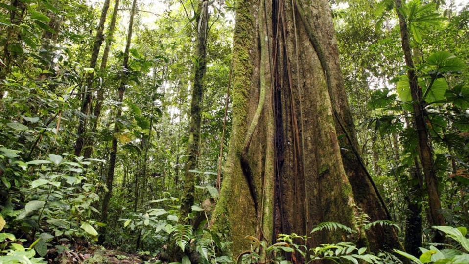 inside tropical rainforest