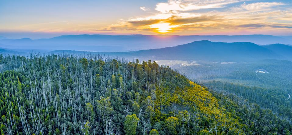 Sunset over mountains and forest in Yarra Ranges National Park