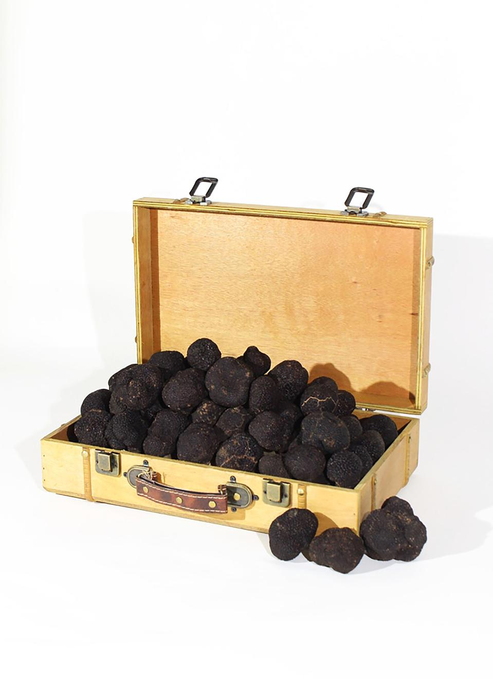 A gold suitcase of black truffles costing $ 1,000 a pound,