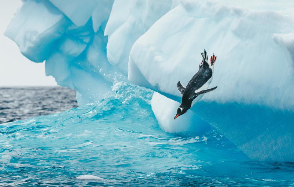 Penguin takes a big dive into the cold antarctic ocean off of an Iceberg.