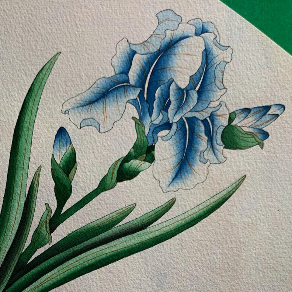 blue lily iris flower in watercolor