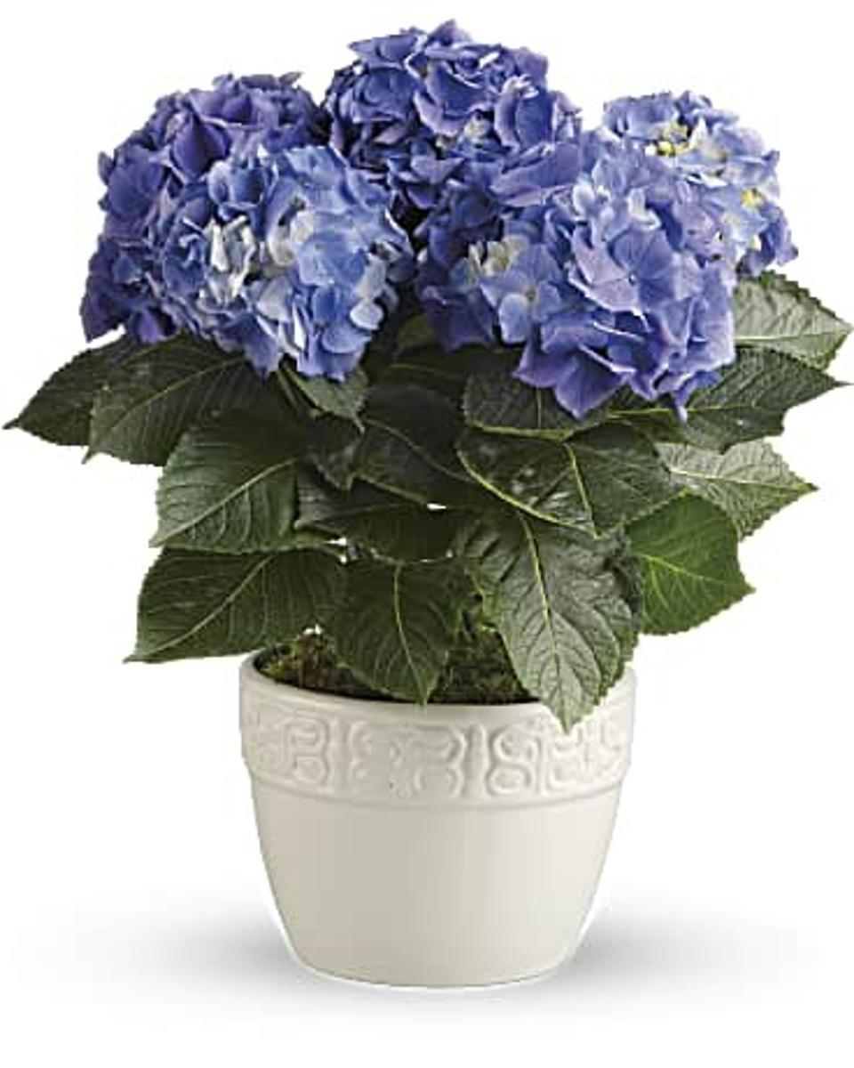 Best Flowers For Mother's Day: Teleflora Happy Hydrangea Bouquet