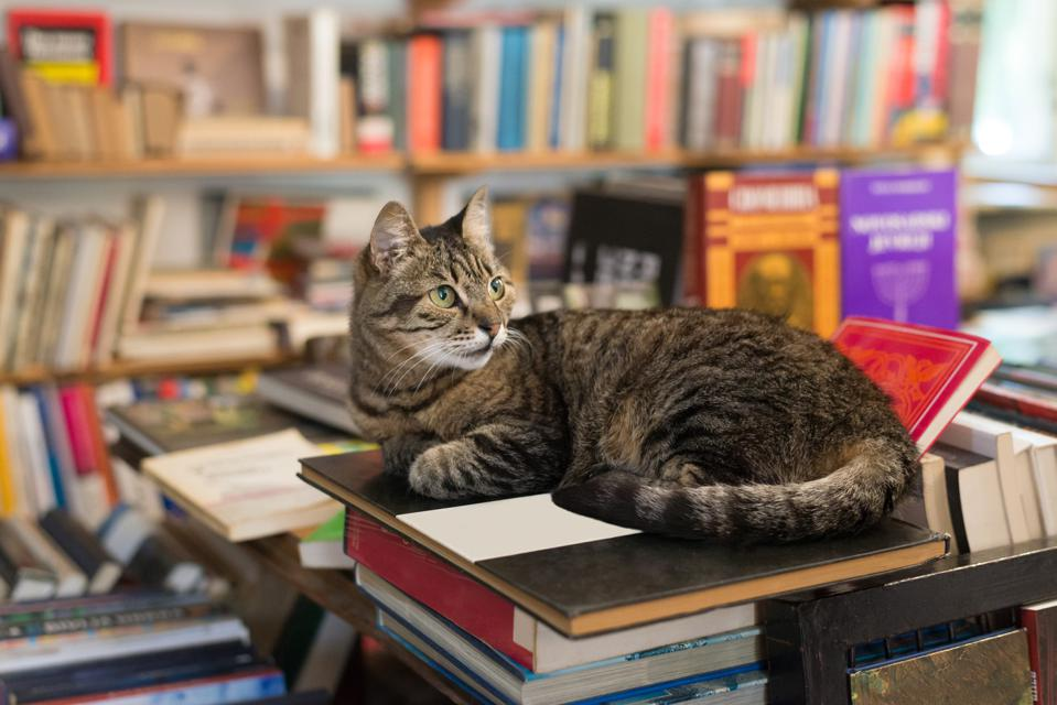 cat cats bookstore bookstores adoption