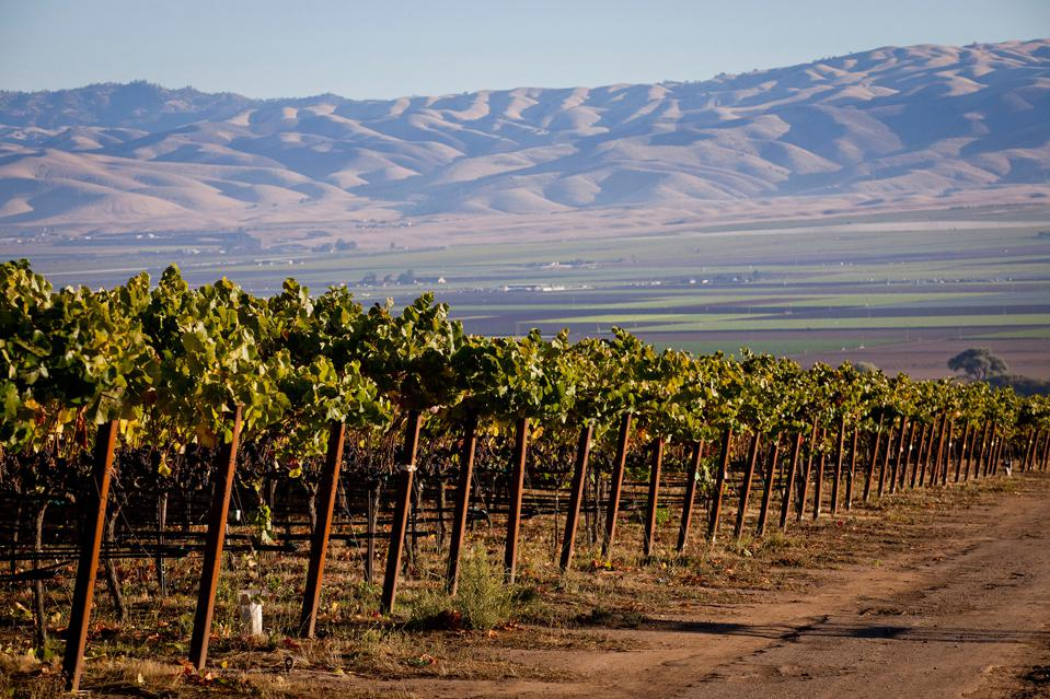 Garys' Vineyard, Santa Lucia Highlands, Monterey, the source for one of the finest Pinot Noirs from Miner Family Winery
