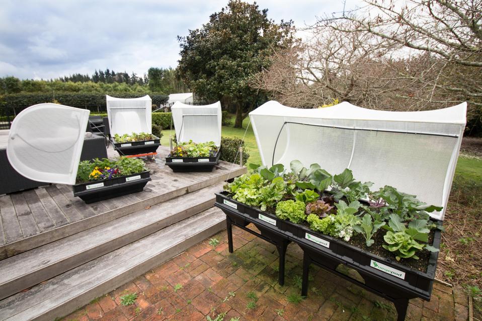 Les lits surélevés de Vegepod sont représentés sur des supports et avec des auvents ouverts.