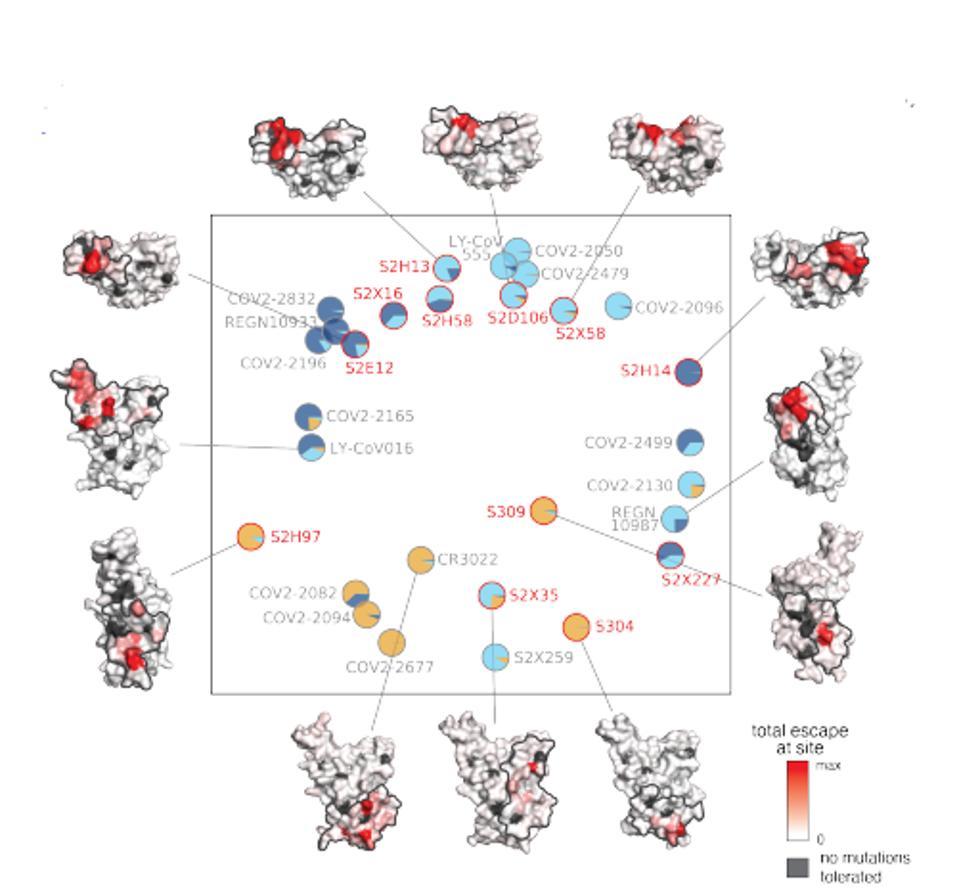 Twelve antibodies in this study.