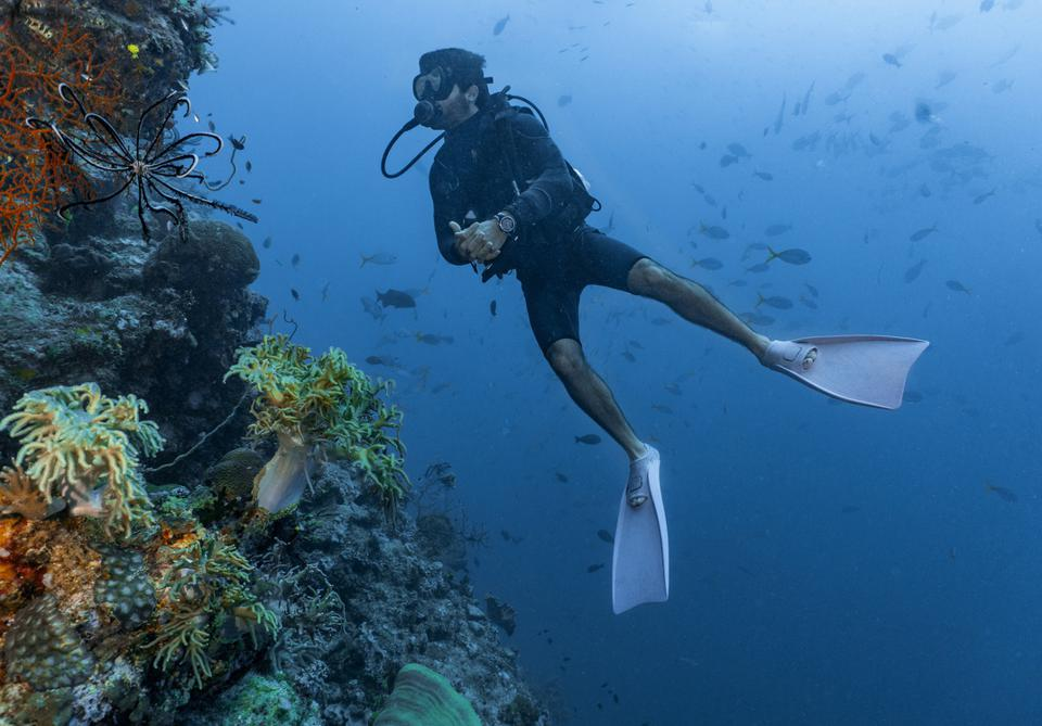 scuba diver exploring the great barrier reef in Australia