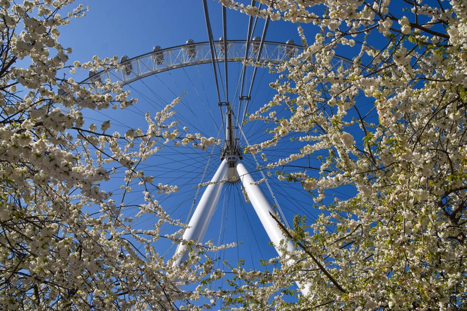 The London Eye and cherry blossom trees on a clear day,...